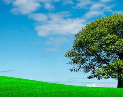 O que é o RCA – Relatório de Controle Ambiental?